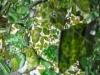 gläsernes Grün